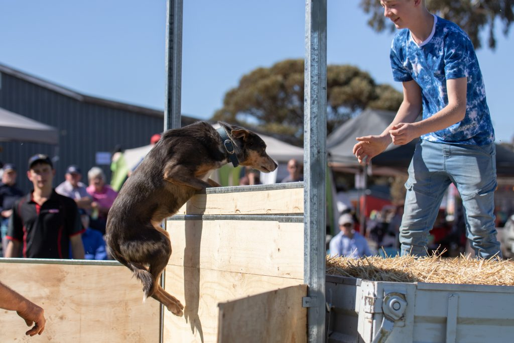 Dog Jumping Competition - Photo by Robyn Bradbrook (Lowres87)