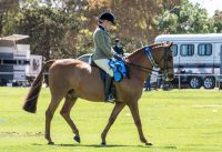 Eudunda Show 2019 Horses In Action (HIA) Results Available