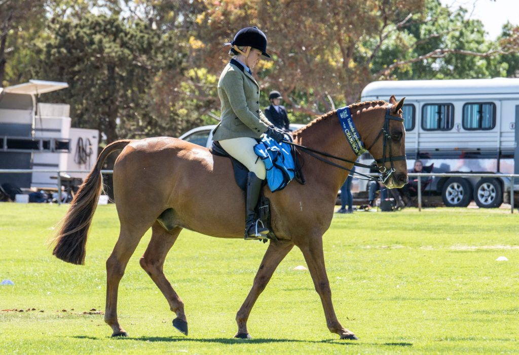 Eudunda Show - HIA Champion Photo by Robyn Bradbrook