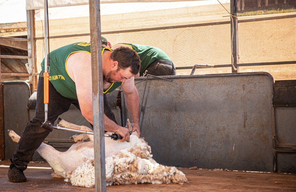 Speed Shearing Competition - Photo by Robyn Bradbrook (Lowres194)