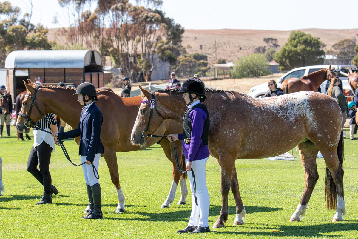 Horses in Action - Photo by Robyn Bradbrook - Silver Springs Photography13 of 210